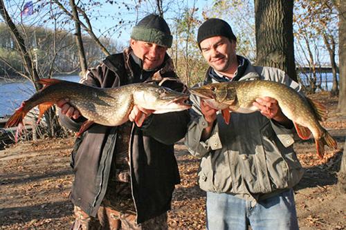 рыбалка на покровско-стрешневском прудах